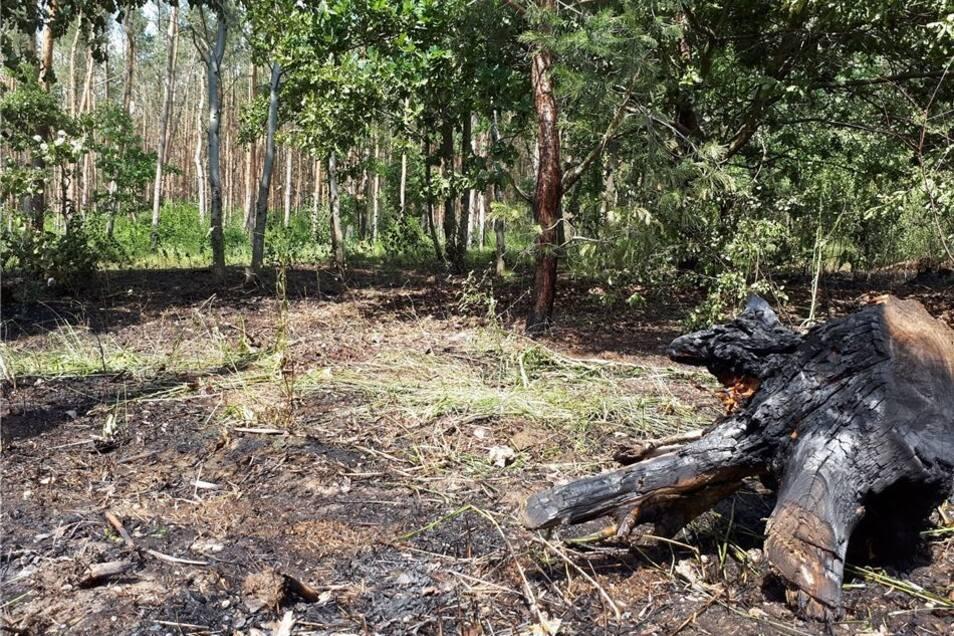 Feuerwehren aus Zeithain und Umgebung mussten binnen weniger Tage drei Mal zu Waldbränden ausrücken.