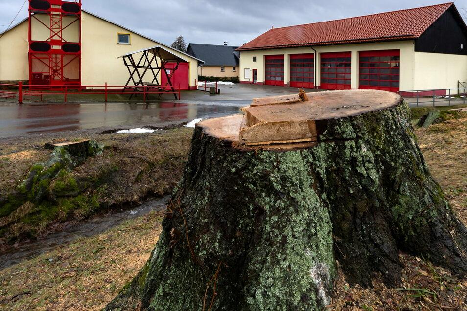 Baumstumpf am Feuerwehrhaus in Lohmen. Mehrere Linden wurden hier gefällt.