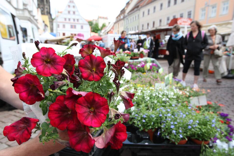 Wochenmarkt in Pirna: Die Verkaufsstände bleiben vorerst geschlossen.