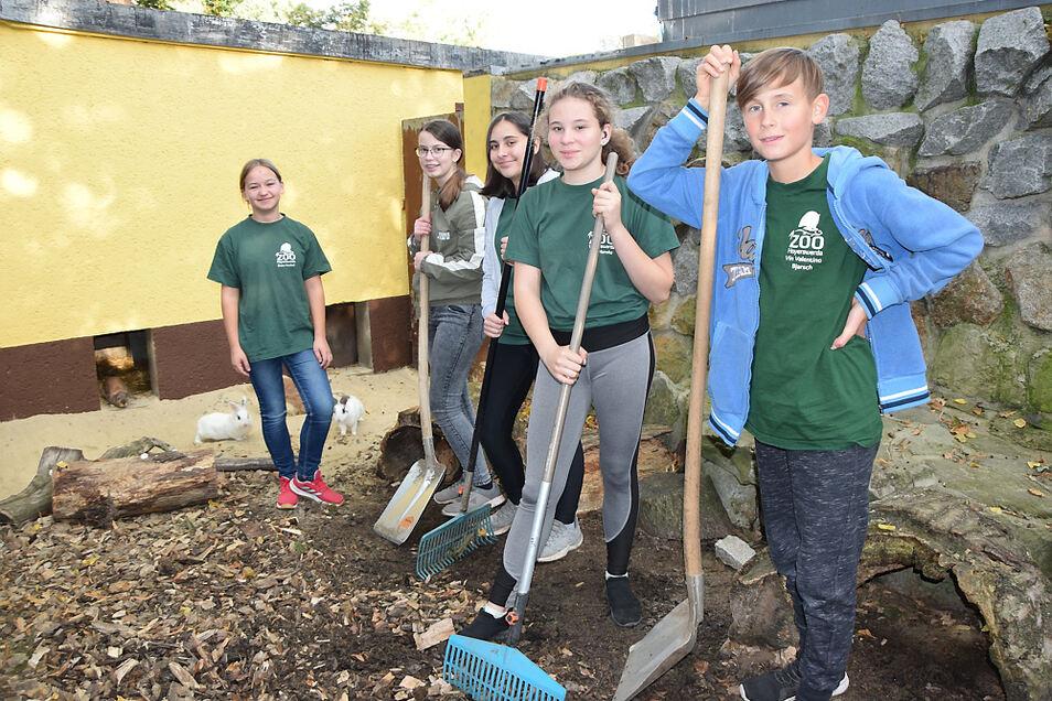 Schüler der Hoyerswerdaer Zoo-AG wollen das Kaninchengehege ausmisten. Tiere-Betreuen ist eben nicht nur Kuscheln und Streícheln.