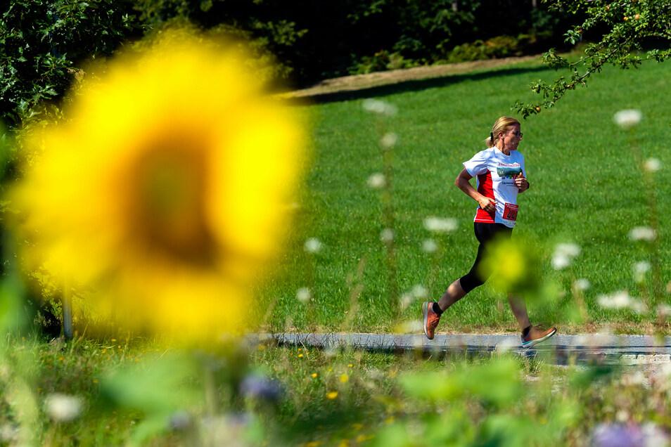 Laufen in der Sommerhitze: bei der Panoramatour in Hinterhermsdorf.