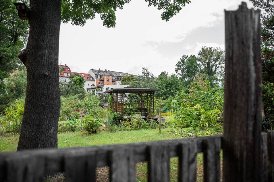 """Die Kleingartenanlage """"Prießnitzaue"""" ist für viele Neustädter ein Idyll inmitten der dicht bebauten Neustadt. Doch bald soll hier etwas Neues entstehen."""