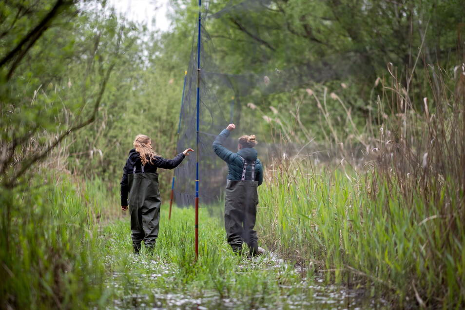 Kathrin Hoffmann und Sabine Urban kontrollieren das Netz im Teich auf gefangene Vögel.