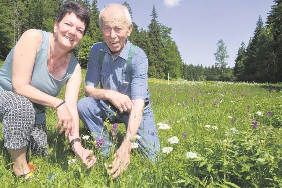 Anfassen ja, aber Pflücken verboten! Ines Thume vom Landschaftspflegeverband und Wiesenbesitzer Hans-Peter Zönnchen zeigen das Breitblättrige Knabenkraut. Die geschützte Orchideenart wächst im Gimmlitztal im Osterzgebirge.