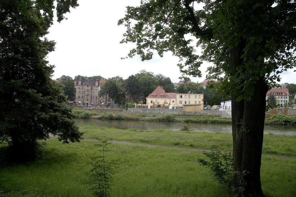 Bäume, wie hier am Neißeufer, sollen in Görlitz noch besser geschützt werden.