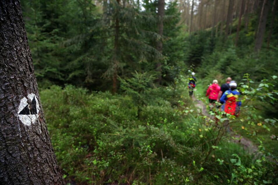 Kameraden der Bergwacht begleiten zwei Wanderer durch den Rauschengrund bei Schmilka, nachdem sich das Paar auf einem Kletterzustieg an den Falknertürmen nicht mehr weiter traute.