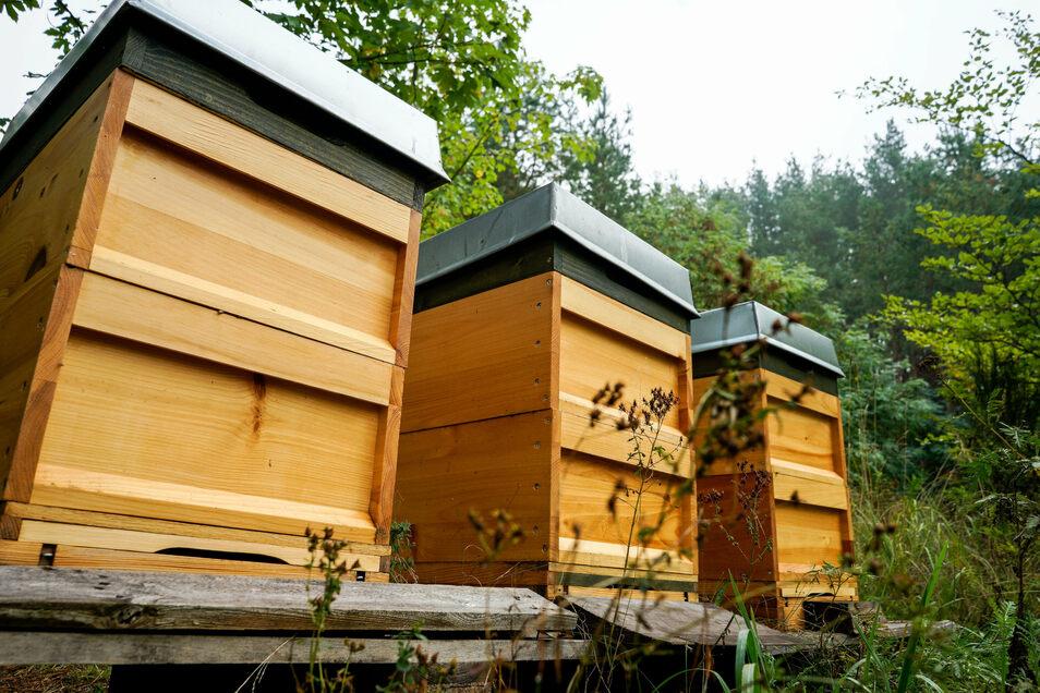 Bienenstöcke in Sohland an der Spree.