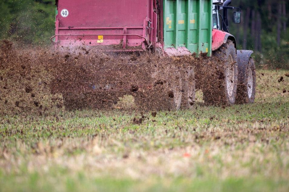 Ein Traktor zieht einen Miststreuer über ein Feld, um es zu düngen. In großen Teilen des Landkreises Meißen ist die Nitratbelastung des Grundwassers zu hoch.