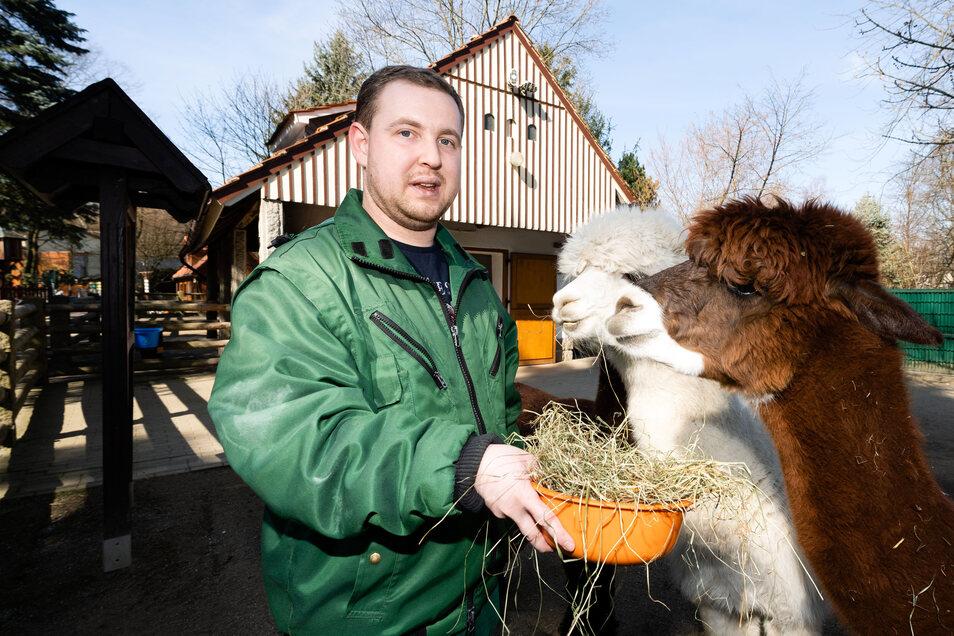 """Bis zur Schließung des Tierparkes Mitte März versorgte Michel Frömmel die Alpakas. Zurzeit dürfen er und die anderen Mitarbeiter vom Verein Lebenshilfe nicht arbeiten. """"Wir hoffen, dass wir unsere Kollegen bald wieder bei uns haben"""", sagt Leiterin Silvia"""