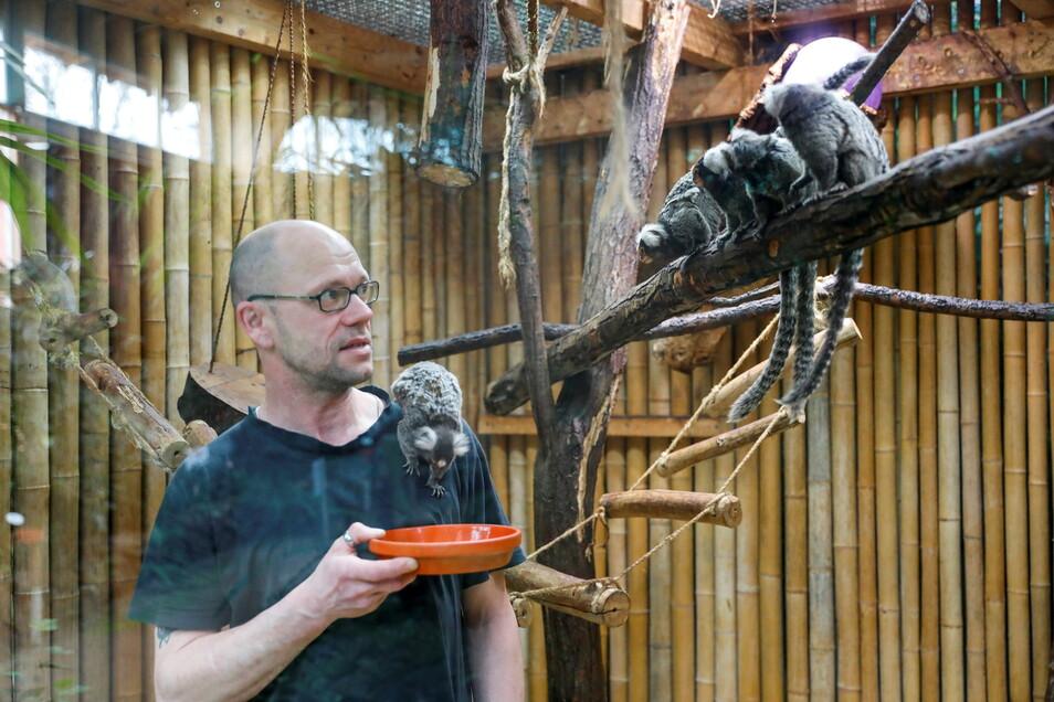 Tierpfleger Steffen Köhler füttert die Weißbüscheläffchen. Er nimmt sich mehr Zeit als sonst für die Tiere. Sie müssen beschäftigt werden.
