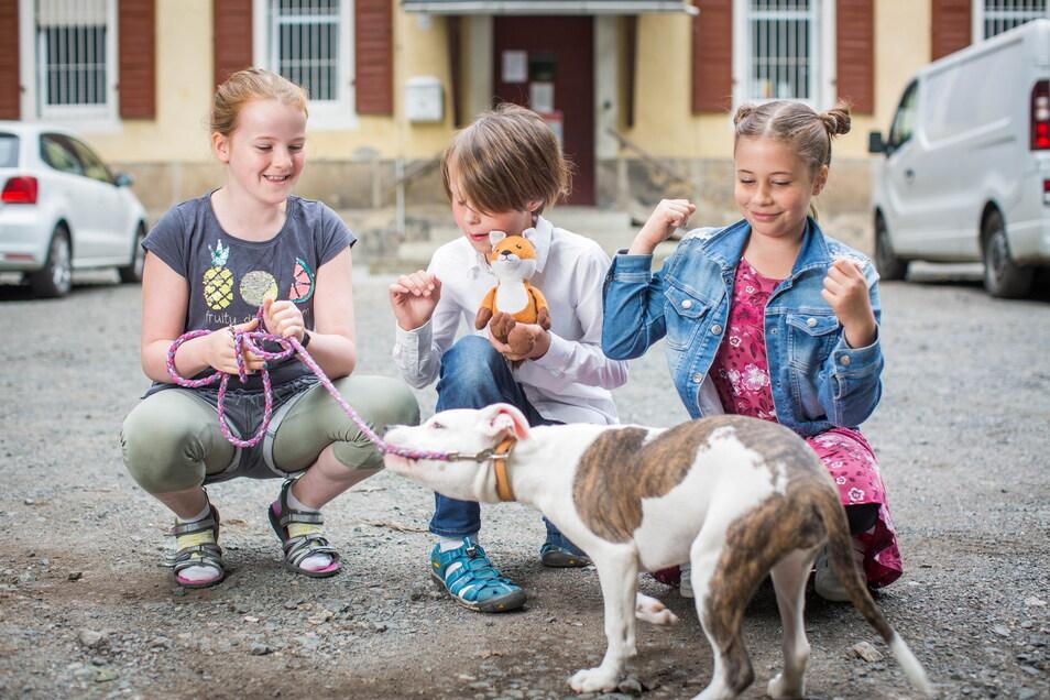 """Für das Wohl der Bewohner des Tierheims """"Am Windberg"""" vollbrachten die Schüler der 39. Grundschule sportliche Höchstleistungen."""