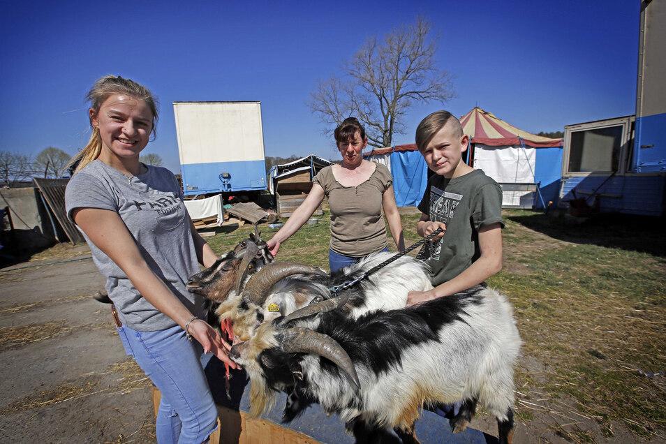 Kassandra (l.), Carola und Marvin Spindler machen sich Sorgen um ihren Circus Mondial, vor allem um die Tiere wie Ziegenbock Otto. Wegen der Corona-Krise sind keine Vorstellungen möglich, in der Zirkus-Kasse herrscht Ebbe.