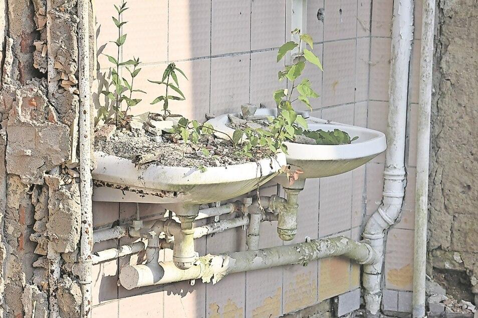 Die Natur kehrt ein: Die Sanitäranbauten an der Rückseite des Schlosses werden abgerissen. Schon während der Arbeiten erobert sich hier die Natur Lebensraum zurück.