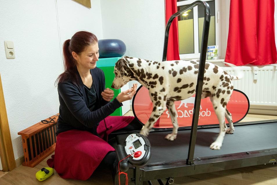Vivien Wittig arbeitet mit Hund Lucky auf einem Laufband. Hier trainiert er grade zu laufen.