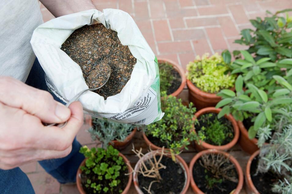 Ab Hochsommer sollten viele Pflanzen nicht mehr gedüngt werden.