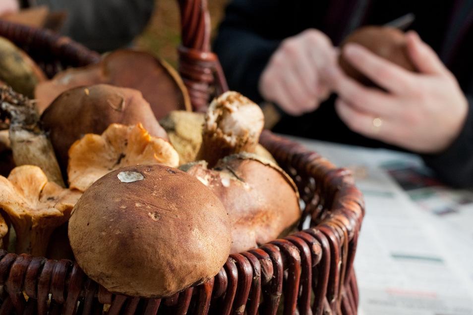 Pilze sind lecker, einige aber können schwere Vergiftungen auslösen. Wer das bei sich vermutet, sollte auf jeden Fall zum Arzt.