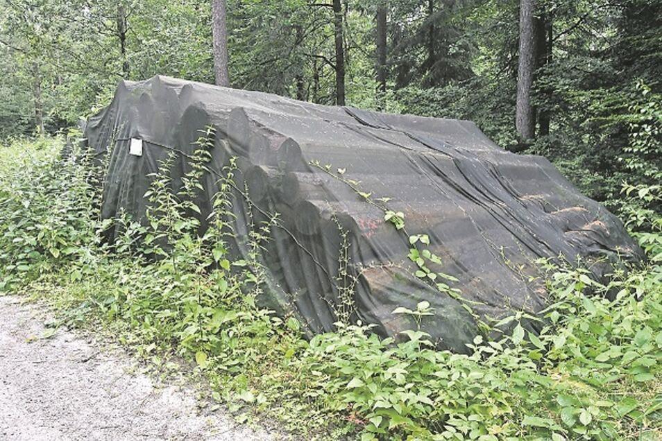 Trauerflor: Die Netze über dem Polder sind mit einem Kontakt-Insektizid getränkt, damit der Käfer hier nicht ausfliegen kann.