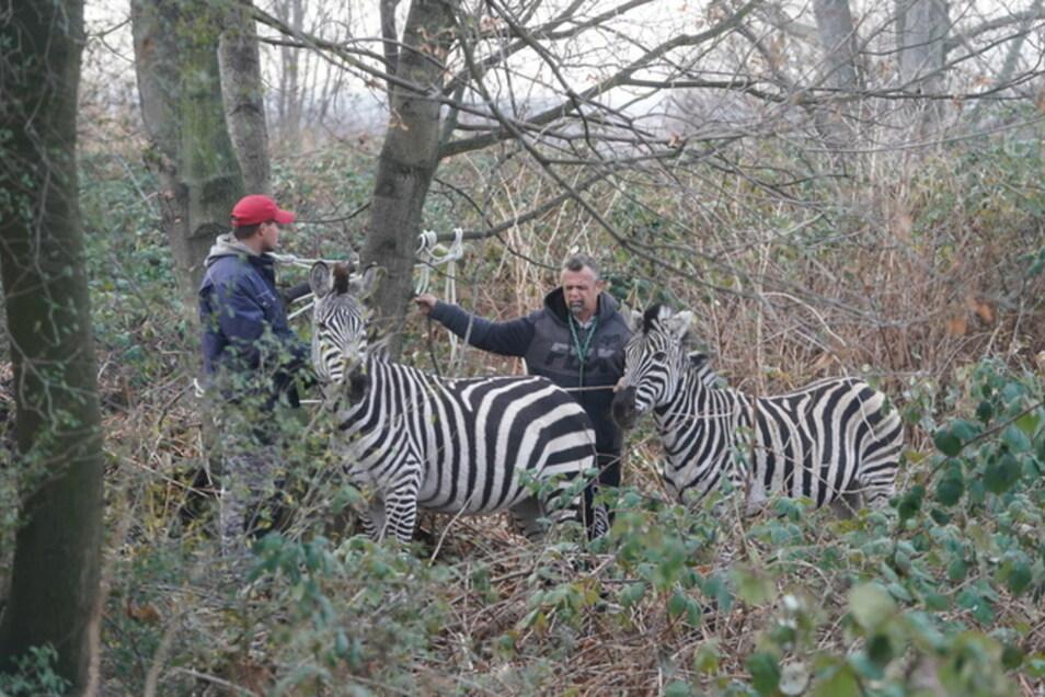 Diese Tiere konnten am Vormittag wieder eingefangen werden.
