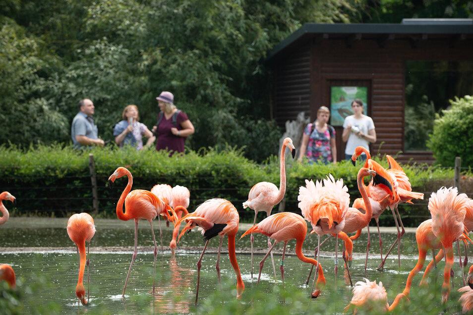 Endlich wieder Tiere gucken: Doch nicht alle Zoobewohner sind ab Montag zu sehen.