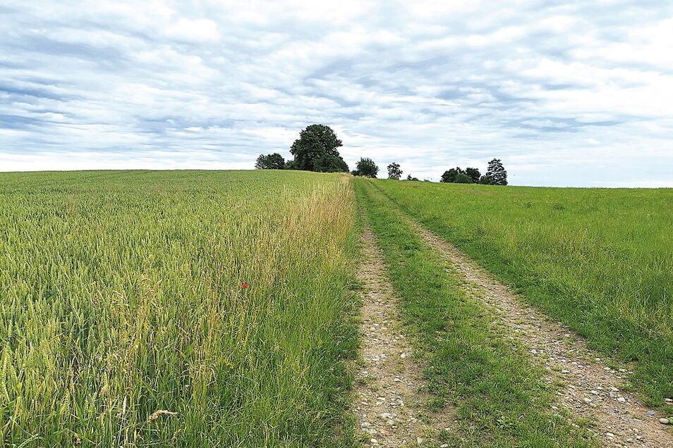 Diese Flächen bei Hausdorf werden versteigert.