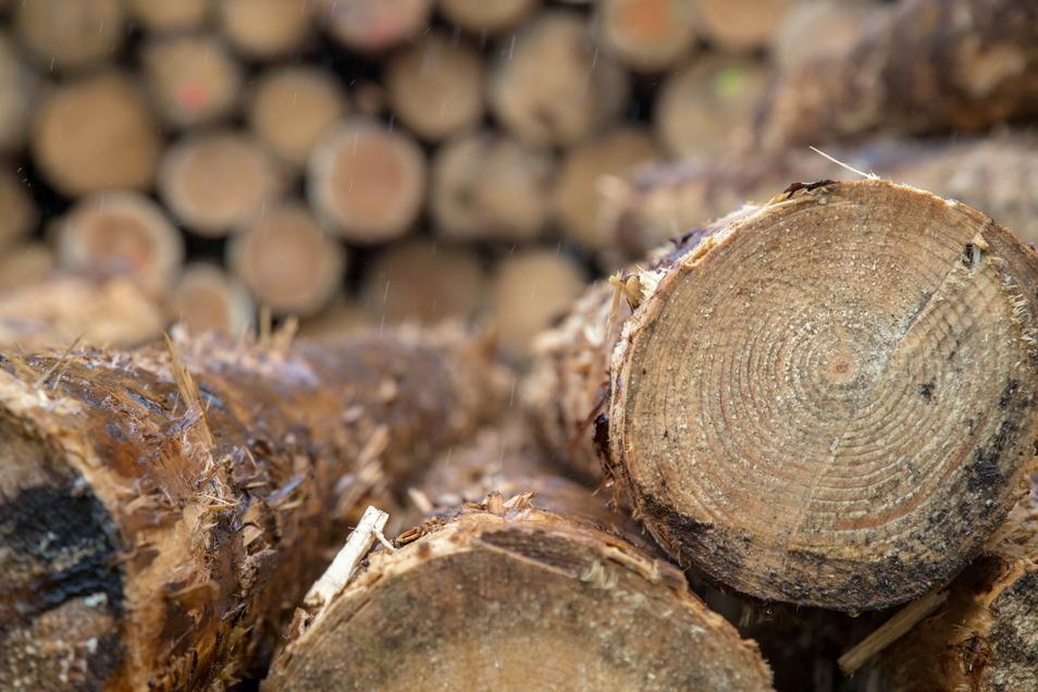 Obwohl Rundholz genügend vorhanden ist, mangelt es am Bauholz. Die Sägewerke sehen die Schuld nicht bei sich, sondern unter anderem in der weltweit gestiegenen Nachfrage.