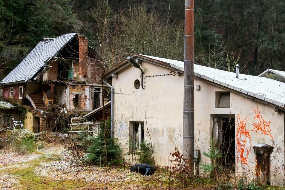 Die Ruinen der Haidemühle: Kommt nach dem Abriss ein Parkplatz oder die Renaturierung?