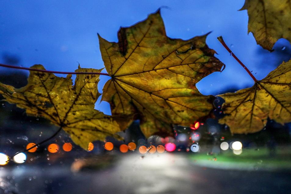 Nach dem Sturm der letzten Tage beruhigt sich die Wetterlage am Wochenende in Sachsen.