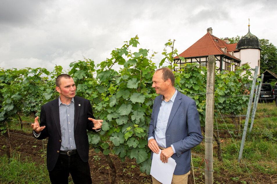Felix Hößelbarth (links), der Vorsitzende der Schutzgemeinschaft Sachsen für die Weinbezeichnung, erläutert Sachsens Landwirtschaftsminister Wolfram Günther, wie Weinbau auch ohne Herbizide auf dem Gut Hoflößnitz geht.
