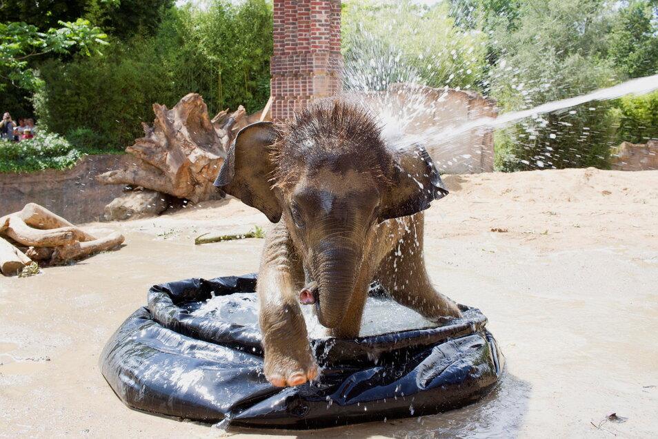 Der kleine Elefant Kiran war der Star der Elefantenherde - am Freitag wurde er tot aufgefunden.