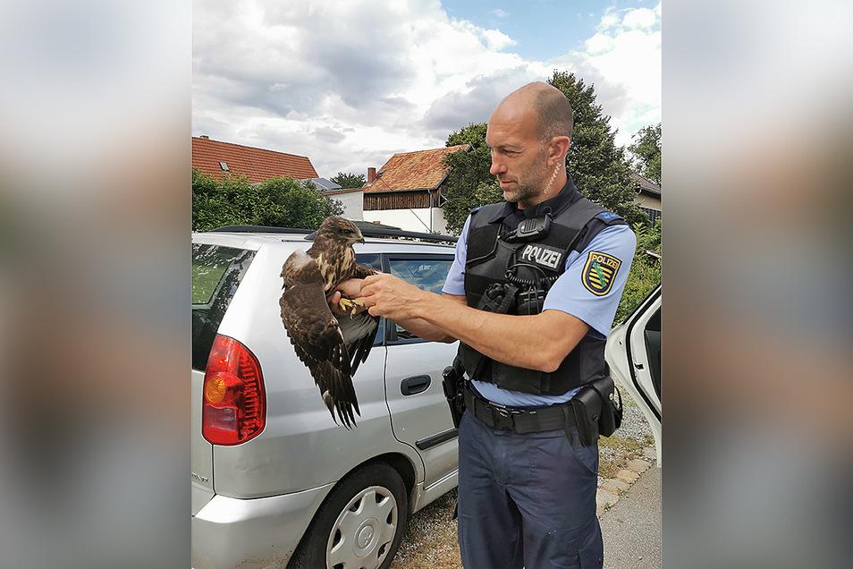 Wie hier in Taschenberg wurde auch in Königstein ein Greifvogel von Polizisten gerettet. (Archivfoto)