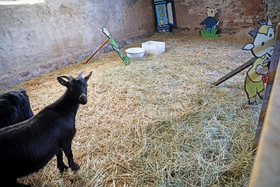 Auch an tierischen Attraktionen sollten die Besucher am Sonntag vorbeigeleitet werden.