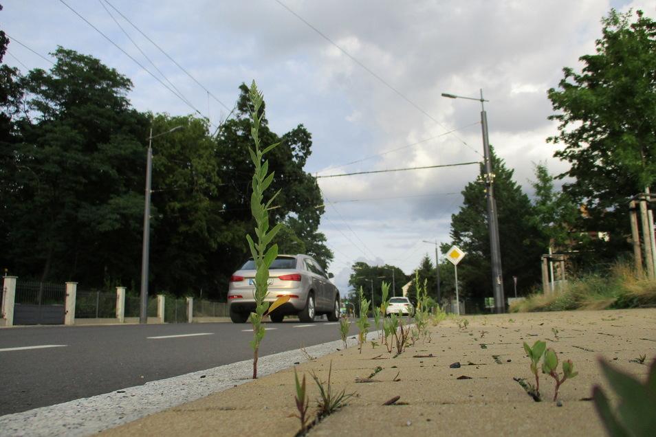 Auf der anderen Straßenseite wächst Gras zwischen den Pflastersteinen.