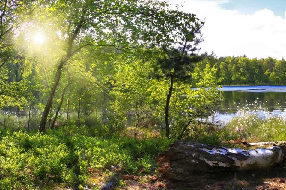 Inmitten einer Wald-Idylle ist pure Erholung garantiert.