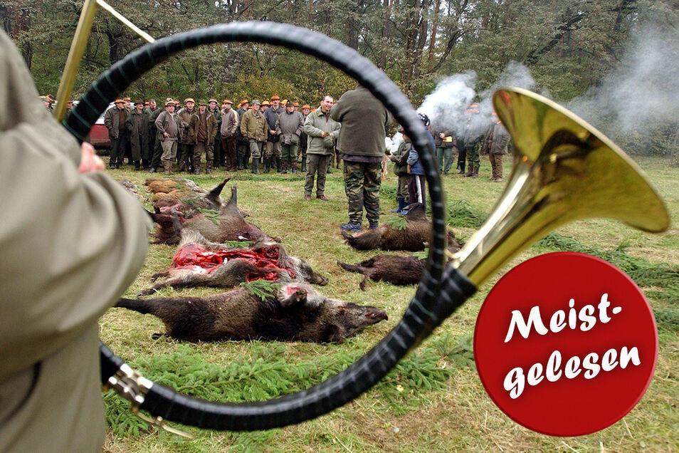 Die Tradition mit Jagdhornbläsern wird auch nach der Jagd in der Dresdner Heide gepflegt, um den Tieren die letzte Ehre zu erweisen.