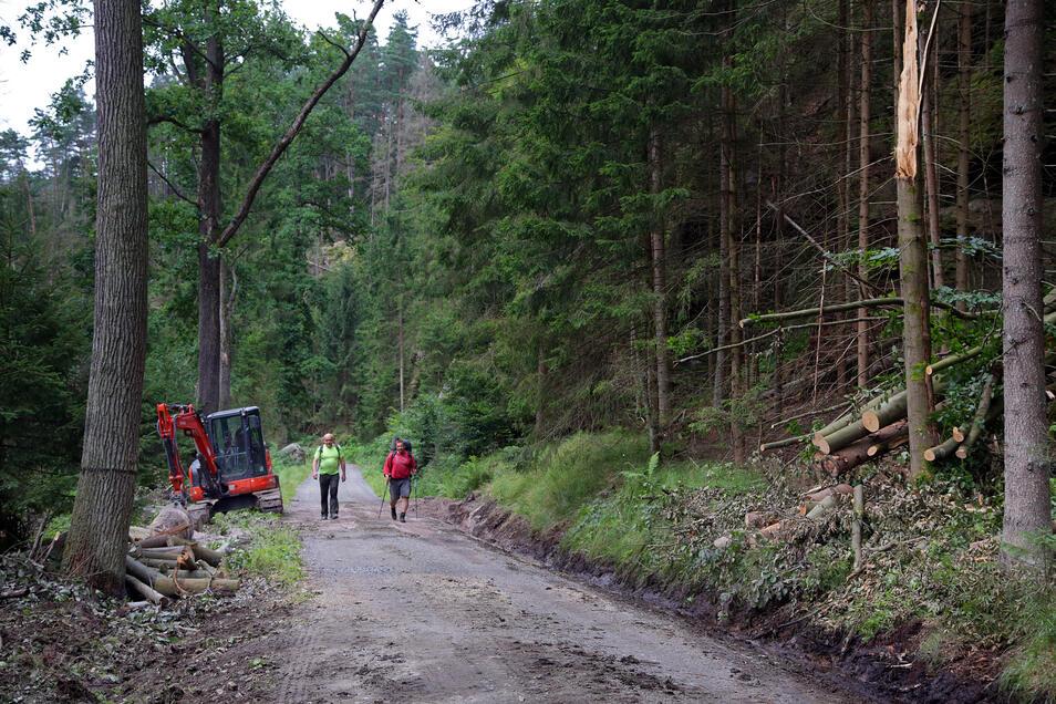 Der Weg am Kleinen Zschand in der Sächsischen Schweiz ist wieder frei.