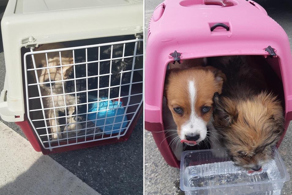 Beamte haben diese Hundewelpen retten können.