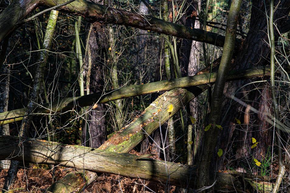 Keine Ordnung, nirgends. Die Natur spielt Mikado - und keiner versucht, die Stäbchen rauszuziehen.