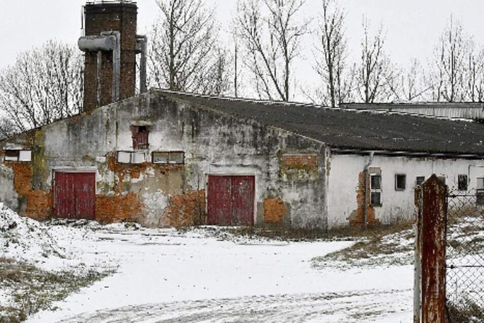 Der Eigentümer lässt die einstige Schweinemast als Ferkelzuchtanlage sanieren.