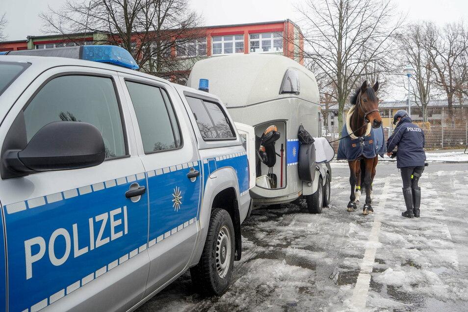 Bevor es auf Streife geht, müssen die Pferde gesattelt werden. Für den Polizeidienst werden vierbeinige Kollegen ohne Angst und mit Ego ausgesucht.
