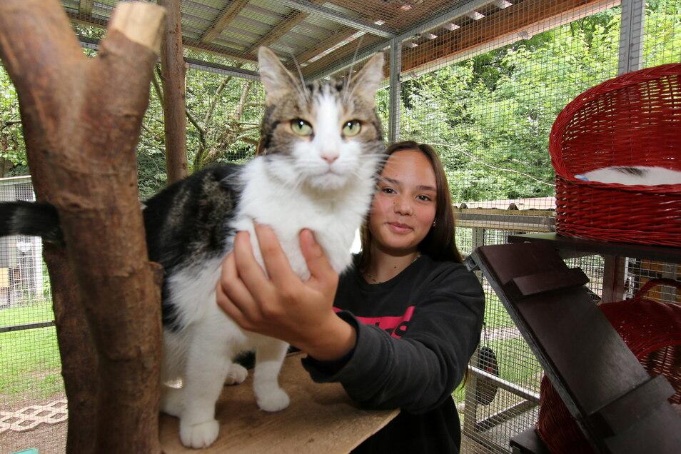Dank ehrenamtlicher Helfer bekommen die Katzen im Tierheim Leisnig manch zusätzliche Streicheleinheit – hier von Schülerin Lotti Engelhardt aus Hartha.