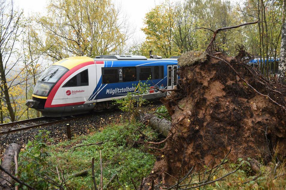 So wie vor knapp zwei Jahren hat am Mittwochvormittag wieder ein Baum die Bahnstrecke im Müglitztal blockiert.