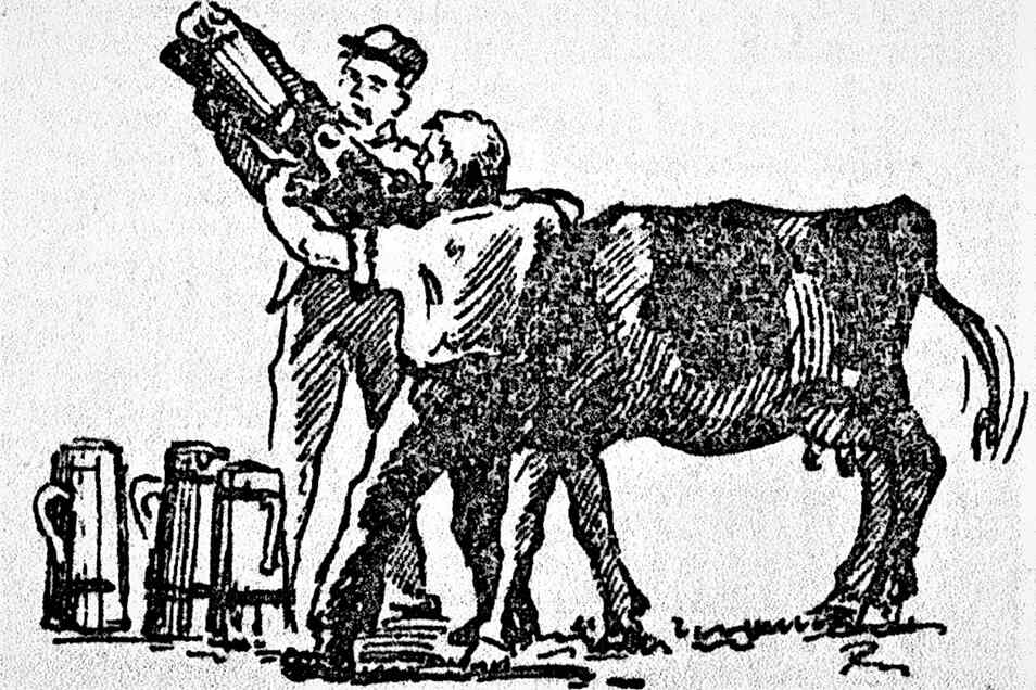 In Hochkirch wurde die Rinderpest mit Bier-, Wein- oder Fruchtessig behandelt. Davon wurden jeder kranken Kuh täglich drei Kannen verabreicht, wie diese Illustration zeigt.