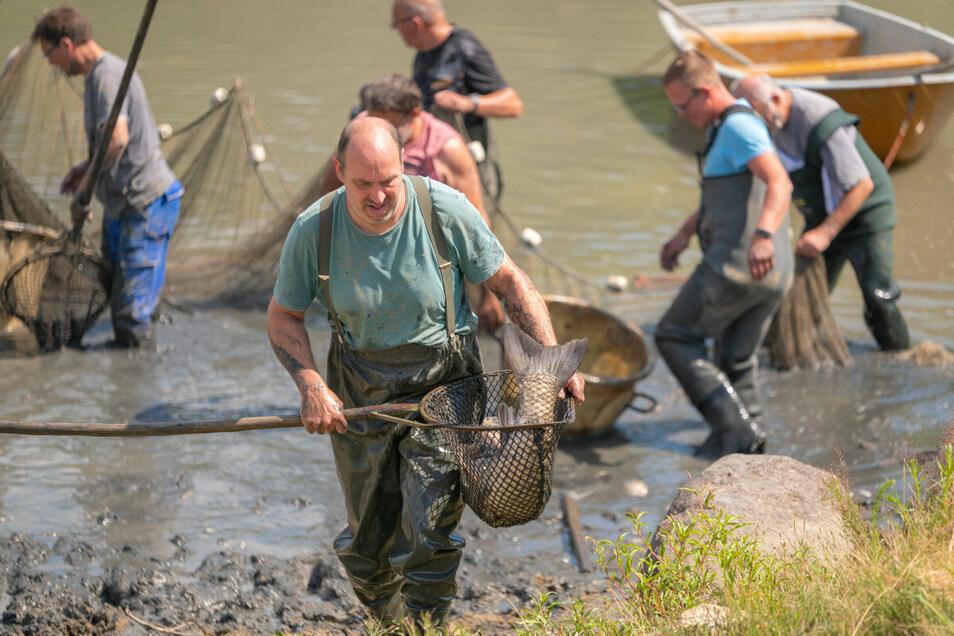 Kaum noch Wasser, zu wenig Sauerstoff: Am Wochenende musste der Libellenteich in Schönau-Berzdorf notabgefischt werden.