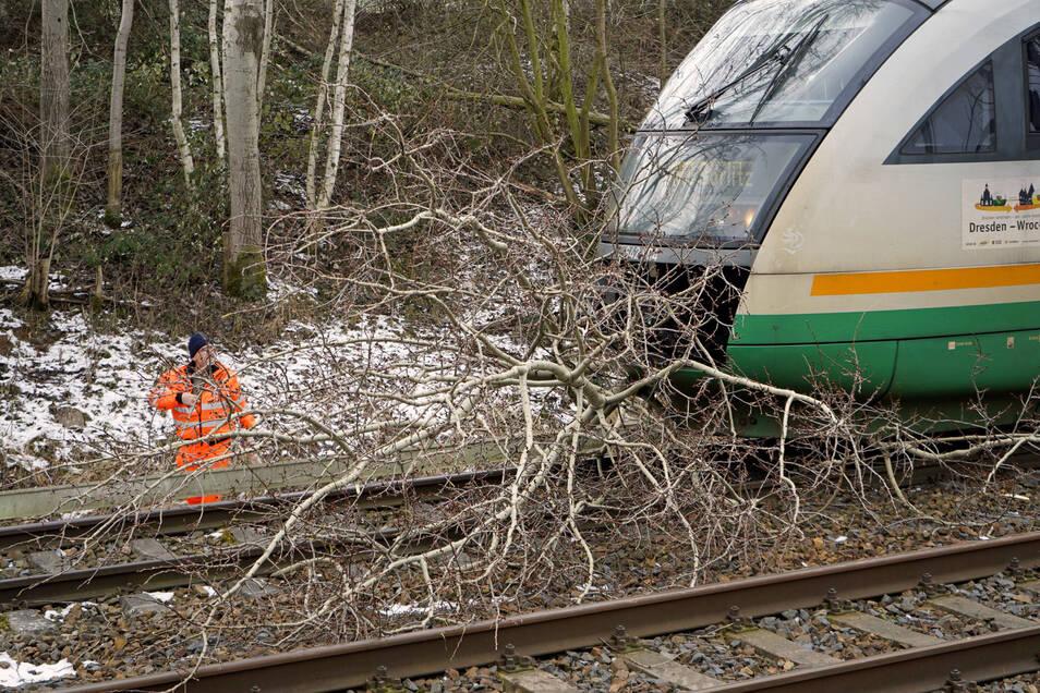 Am 1. Februar 2019 kollidierte ein Trilex auf der Strecke zwischen Dresden-Löbau-Görlitz mit einer Baumkrone - einer von 13 Fällen in dem benannten Jahr auf den Trilex-Strecken in Ostsachsen.