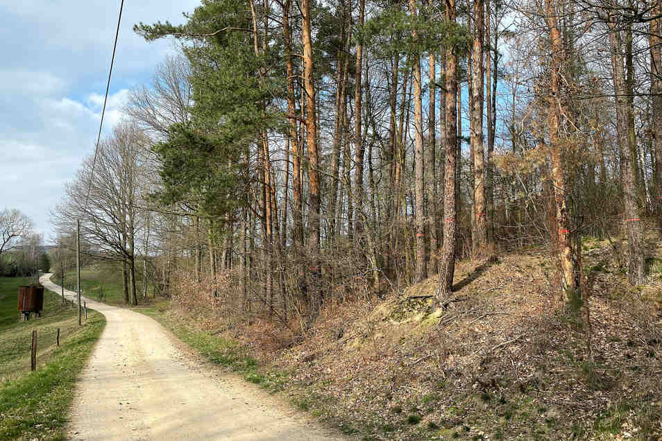 Vom Borkenkäfer befallener Wald im Steinbachtal. Hier werden bald die Sägen surren.