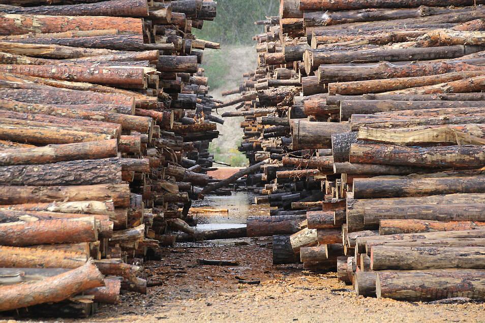 Im vergangenen Jahr wurde der Nasslagerplatz in Sabrodt in Betrieb genommen. Dort kann Holz von den schädlichen Borkenkäfern mittels Wasser befreit werden.