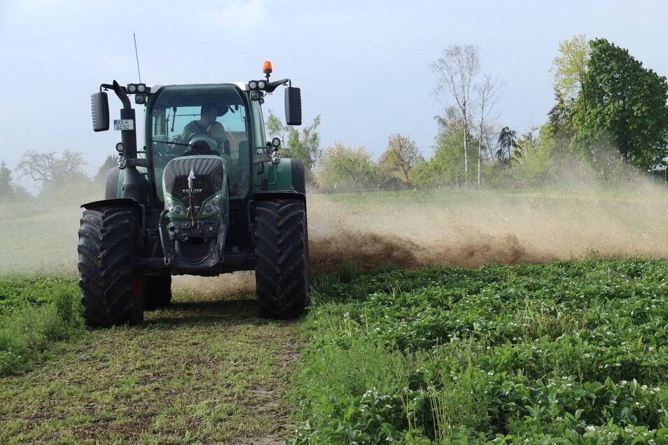 Was macht der Traktor auf dem Erdbeerfeld an der B 6 bei Riesa? Das mag sich mancher Autofahrer fragen.
