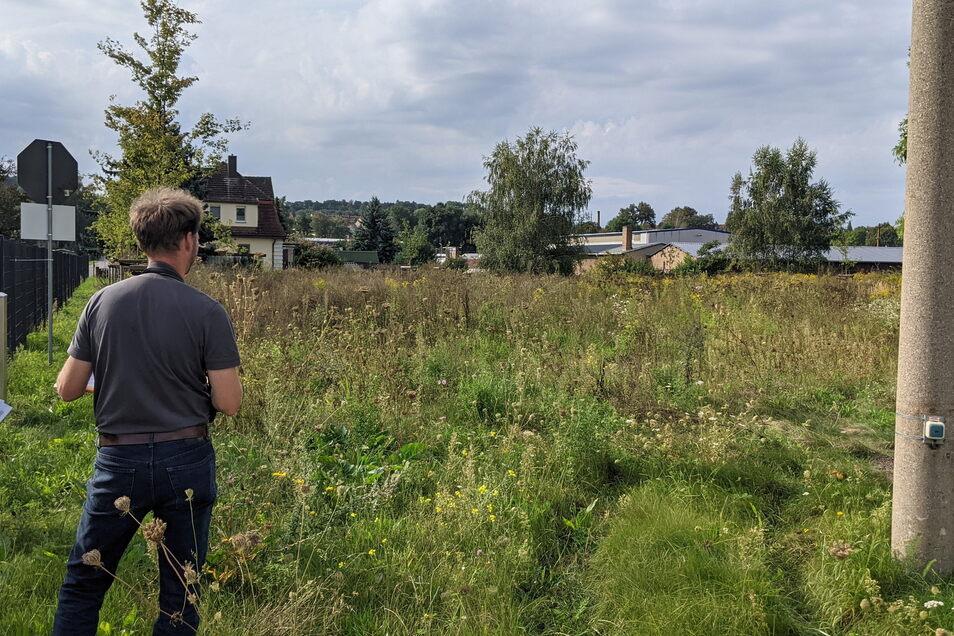 Wildblumenwiese auf dem Konos-Firmengelände in Nossen.