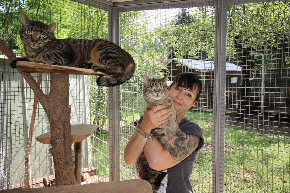 Silke Pfumfel kümmert sich um die beiden Katzen Chico und Noshe.