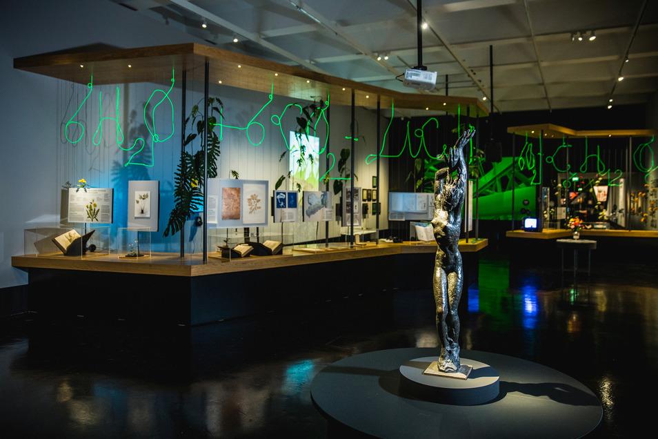 Ein große Sammlung an Ausstellungsstücken erwartet die Besucher im Hygiene-Museum.